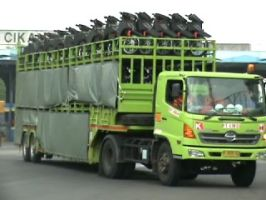 Gallery   3b_our_service_motor_carrier_mt_web